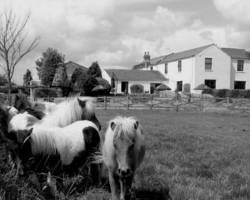 Photo of Jersey Farm Barnard Castle