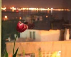 Photo of Tulip Guesthouse Istanbul