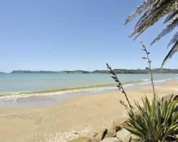 Whitianga Campground