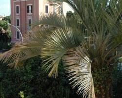 Palm d'Or