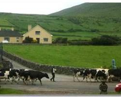 Photo of Garvey's Farmhouse Ventry