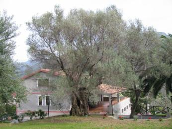 Photo of Agriturismo i cedri Orsomarso