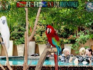 RNR Eco Adventures Pool Villa Resort & Hostel