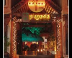 Photo of Blue Parrot 5th Avenue Playa del Carmen