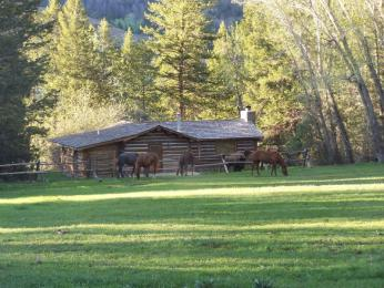 Photo of The Historic UXU Ranch Wapiti