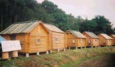 Photo of Log Cabin Nature Minamiboso