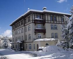 Photo of Soldanella St. Moritz