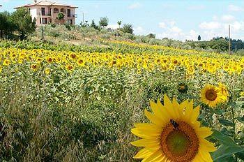 Il Girasole B&B