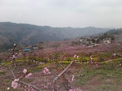 Taohua Scenic Resort