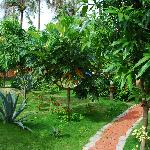  The garden of the guest house
