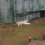 Wuxi Zoo