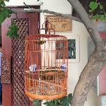 birdcage in the yard