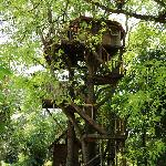 Rabeang Pasak Tree House Resort Foto