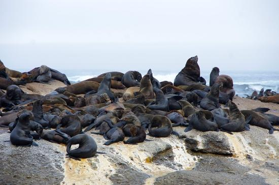 Saint Francis Bay, Afrika Selatan: seal point