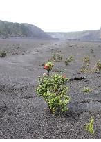 Kilauea Iki Trail