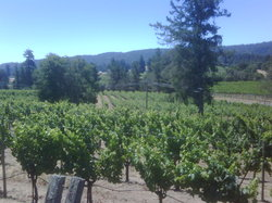 Handley Cellars Winery