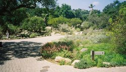 Santa Barbara Botanic Garden