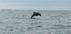 Chincoteague Cruises & Nature Tours