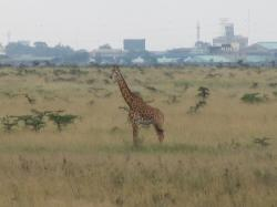 Nairobi National Park, summer 2006