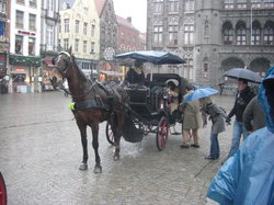 Horse Drawn Carriage Tours