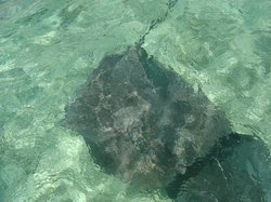 Leopard Rays Trench