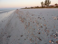 Pulau Sanibel