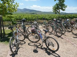 Bikes 'n Wines - Day Tours