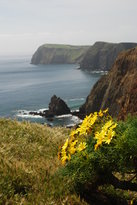 Anacapa Island