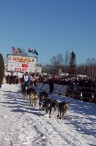 ‪Iditarod Trail Sled Dog Race‬