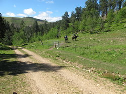 Blacktail Horseback and Walking Tours