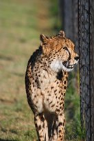 Cheetah Research and Breeding Centre