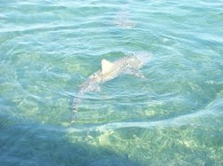 Key West Extreme Adventures Private Shark Tours