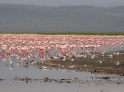 East Africa Adventure Tours and Safaris - Day Tours