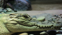 Naturaliste Reptile Park