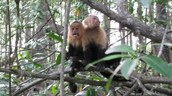 Priss Tours (Mangrove Monkey Tour)