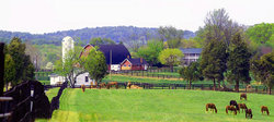Wolftrap Farm