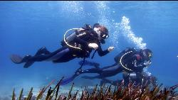 Blue Fin Divers Naxos Greece