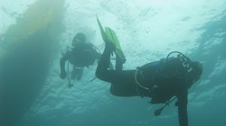 Austral Divers