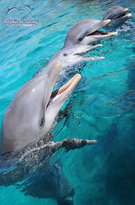 Curacao Dolphin Academy