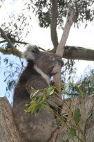 Parndana Wildlife Park