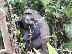 Full-Day Arusha National Park Tour with Lunch