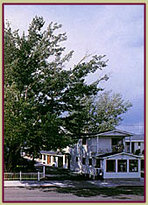 Silver Maple Inn