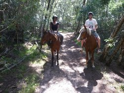 Mountainview Horse Trails Wilderness