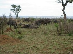 Funky Monkeys Backpackers & Safaris Private Day Tours