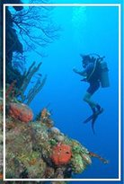 Buceo Malta