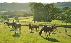 Amish Country Riding Stables