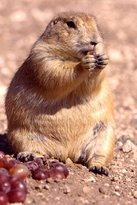 Prairie Dog Town