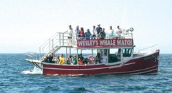 Wesley's Whale Watching