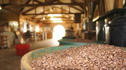 Tanna Coffee Roasting Factory