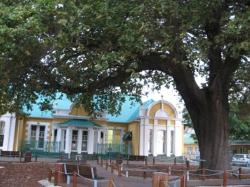 The Old Slave Tree